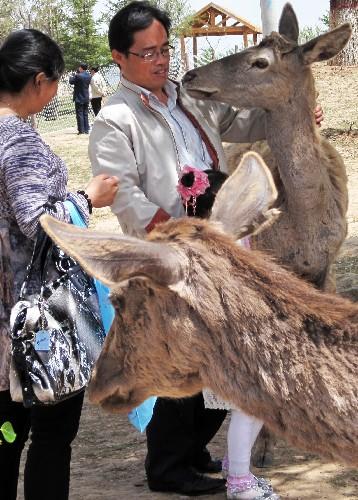 5月16日,游客在青藏高原野生动物园与马鹿亲密接触.